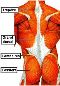 Häufig Exercices de musculation PV53