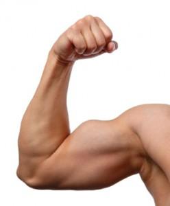 musculation bras